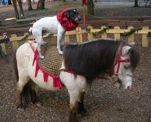 dog&pony4