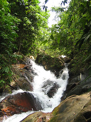 Маленький водопад в джунглях.