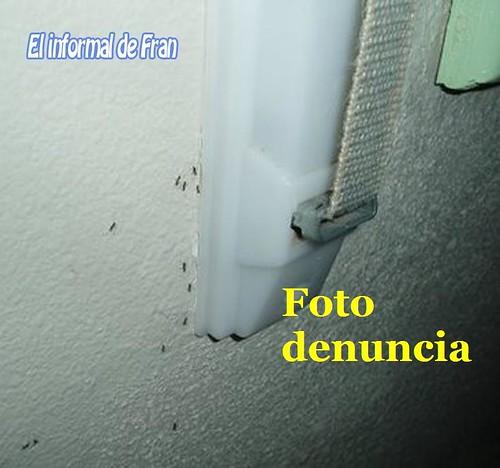 hormigas en el hospital