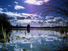 Nature forever (Nicolas Valentin) Tags: blue sky reflection tree reed water clouds scotland bleu lochlomond abigfave impressedbeauty
