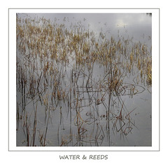 Water & Reeds (Magdalen Green Photography) Tags: water reeds dundee scottish simple pure tayside