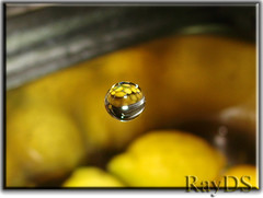 Some Lemons in One Water Drop (RayDS) Tags: macro reflection water speed reflections photo droplets high lemon waterdrop action sony drop refraction droplet waterdrops dsc h5 interestingness39 rayds impressedbeauty