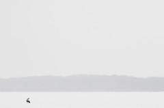 """獨釣寒江雪 """"Lonely fishing snow"""" (Mingfong) Tags: winter blackandwhite bw white snow cold monochrome composition one cool fishing poetry poem alone peace snowy bare release freezing peaceful poetic story madison simplicity albumcover lonely bleakness minimalism stark sublime stories simple 雪 minimalist absolute lakemendota universityofwisconsinmadison 白色 lessismore 白 詩 桌布 interestingness6 雪地 詩人 極簡 madisonmagazine 寒冷 mingfong exploretop20 江雪 madison365 narrativephotos 柳宗元 獨釣寒江雪 musicflyer 風景桌布 冰天雪地 mingfongjan 雪國 冰釣 coolandcold 極簡風格 雪白 artbrochure 雪日 sketchoflight mingfongphotography 白色桌布 黑白桌布 madisonmagazinefeburary"""