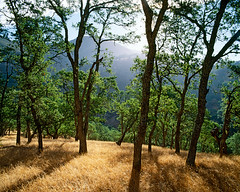 Memory of the Trees (Lightchaser) Tags: california trees nature landscapes eyeofthebeholder fujivelvia mountdiablostatepark beautifulcapture md01100 kqedquest impressedbeauty holidaysvacanzeurlaub