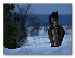 Nose under the Sun (Renald Bourque) Tags: travel horse canada cheval nose bravo searchthebest under québec nez magicdonkey outstandingshots lefion superaplus aplusphoto bratanesque