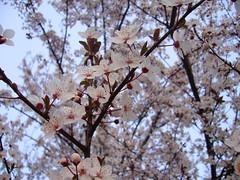 京の週報 4月1日~7日