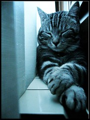 A well- deserved break (Andrea Guandalini) Tags: cat relax break pause relaxation gatto pausa bestofcats