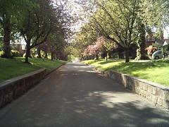 Darley Park 1 (Fluffs) Tags: park trees blossom path