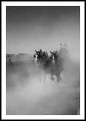 Hard Driving Team (Light Collector) Tags: bw horse team dust odt interestingness251 i500