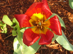IMG_0744 (colin j.) Tags: flowers flower detail macro closeup geotagged genitalia newenglandconservatoryofmusic geolat42341240 geolon71086422