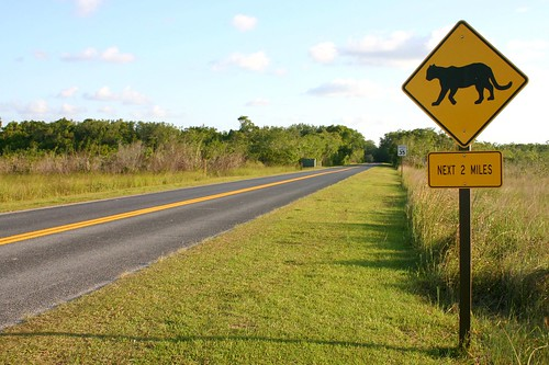 Fla panther crossing