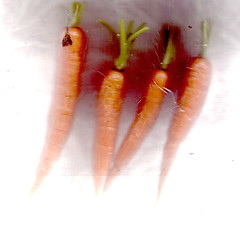 carrots (efo) Tags: scan food vegetable riverdog carrot orange white root