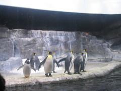 IMG_0700 (David Breyer) Tags: newport aquarium newportaquarium penguins animals