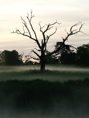So lonely (Kevin Day) Tags: uk england tree 1025fav dawn britain deleteme10 buckinghamshire deadtree slough berkshire kevday langley chtk