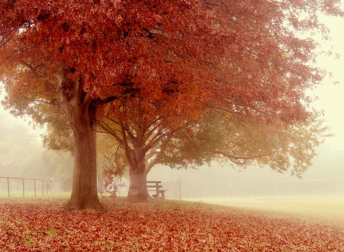 One Autumn Day by eyecatcher