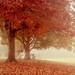 One Autumn Day