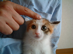 DSCF0076 (junku) Tags: cats cat kitten kitties    fuwari
