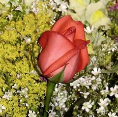 Dsc00879_88mcc (SantaRosa OLD SKOOL) Tags: flores folhas brasil riodejaneiro ilha guanabara governador flowers flres rio ilhadogovernador baa