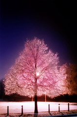 REPOSTED - Crystal Tree - My first 100 favs photo (Freddie jr) Tags: pink blue winter ontario canada tree film ice topf25 silhouette topv111 night wow topf50 topv555 topv333 topf75 topv444 favme 100v10f topv222 500v50f icestorm sarnia topf100 topf35 topf60 topf20 topf30 topf40 topf45 topf55 2005favfilm 2005favfilmfaved