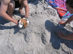 Burying Maggie at the beach (finn) Tags: dog maggie beach maine dinosaur