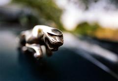 Jaguar (Davoud D.) Tags: car jaguar badge cat leapingcat marque deleteme deleteme2 deleteme3 deleteme4 deleteme5 deleteme6 deleteme8 deleteme9 deleteme10