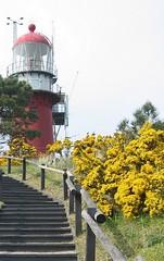 lighthouse vlieland (Karin & Rene) Tags: lighthouse netherlands vlieland vuurtoren brem waddeneilanden karinenrene2005
