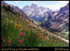 Paintbrush Divide, Grand Tetons (rickcanyon42) Tags: flowers mountains searchthebest grandtetons tetons grandtetonnationalpark cascadecanyon