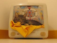 iCat in b0x ! (Pounet) Tags: apple cat macintosh mac imac box icat