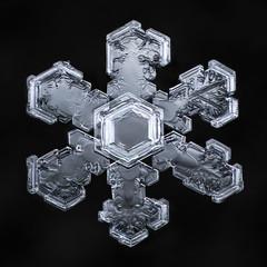 Snowflake-a-Day #8 (Don Komarechka) Tags: snowflake snow flake ice crystal nature fractal geometry macro mpe frozen