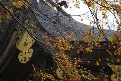 a chorus of leaves 1 (takmagar) Tags: autumn roof winter red color fall leaves temple japanese shrine autumnleaves twigs shiga hiyoshi hiei hieizan enryakuji ishiyama ohtsu