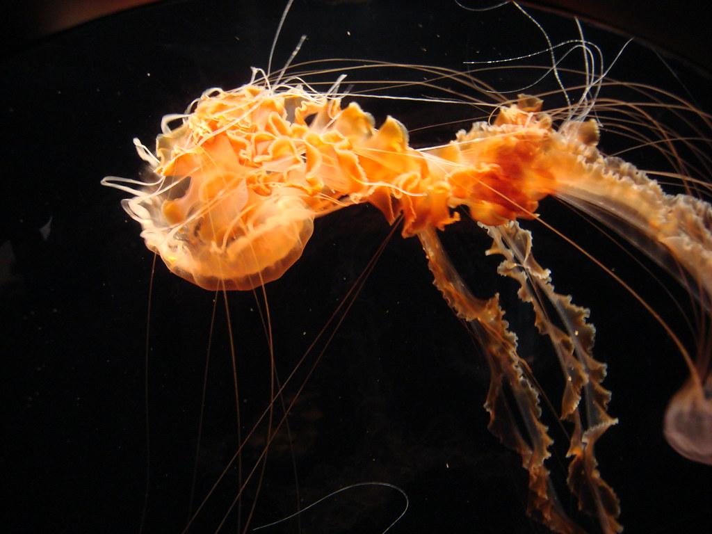 Stunning Picture of a Jellyfish