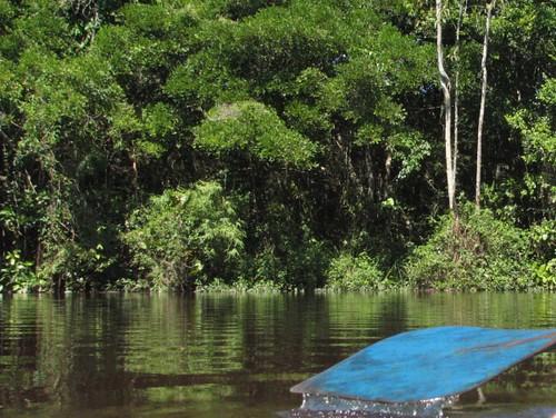 Amazonas - en stilla färd i kanot