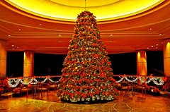 Poinsettia Christmas Tree (Bill Adams) Tags: tree hawaii holidays poinsettia merrychristmas languages kohalacoast hapunabeachprincehotel