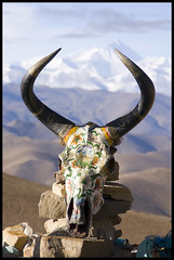 Horns to the Heavens (Ernie Reyes) Tags: china asia tibet everest worldtravel interestingness216 i500 globalspirit lprituals