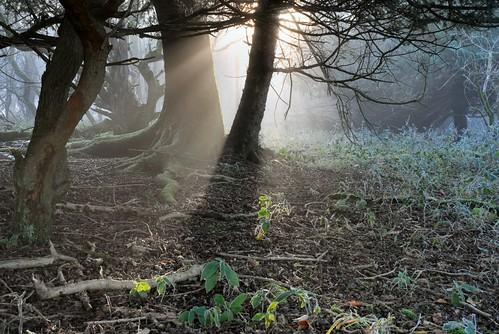 Barlavington Down - West Sussex