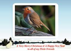 Season's Greetings (Foto John) Tags: friends flickr merrychristmas happynewyear featheryfriday
