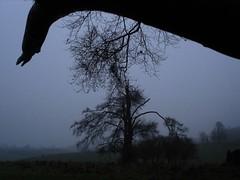 DSC01927 (edwardsgt) Tags: winter tring herts