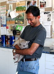 Shami holding the wombat