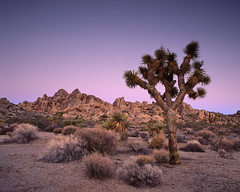 Slow Picture Dream (Lightchaser) Tags: california landscapes sunrises joshuatreenationalpark fujivelvia jt97105