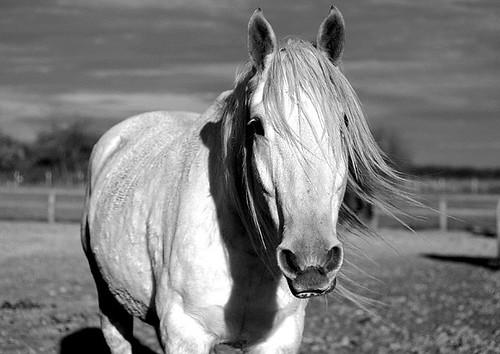 Horse Rockstars