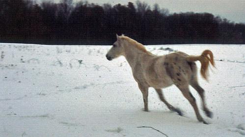 Horse running away in snow