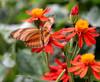 (lemank) Tags: butterfly butterflyworld interestingness162 i500 outstandingshots colorphotoaward
