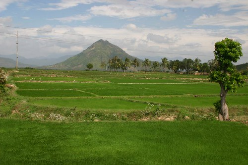 Rice Paddies on the short-cut way to Nha Trang