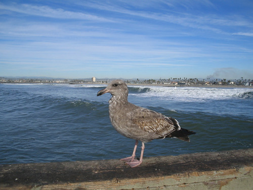 Bird on the OB pier 2006 01-05