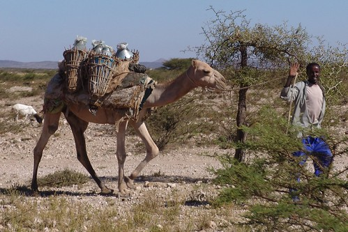 Nomad with his camel on road to Borama