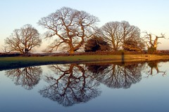 Winter oak reflections 02 - by treehouse1977