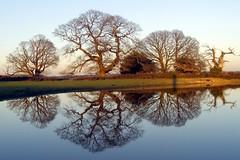 Winter oak reflections 02 - by treehouse1977