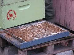 Beekeeping 2093