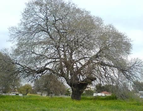 עץ בחורף
