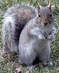 ***EXPLORE*** FBI: you want to take my photo ??? Only if you give me a bag of nuts!!! (Frozen in Time photos by Marianne AWAY OFF/ON) Tags: nature animals squirrels flickr wildlife scout explore critters splash webster fbi unbearablycute smallanimals backyardcritters sciuruscarolinensis flickraddicts easterngreysquirrel flickrexplore flickrscout favorites45 naturearoundyourhouse specnature spectacularnature beautyofnature flickrnature beautifulcapture nationalgeographicwannabes flickrcrazy inexploreinterestingness impressedbeauty impressedbyyourbeauty faithfulflickrfriends easterngreysquirrels diamondclassphotographer flickrdiamond impressedbyyourbeautyinviteonlypool squirrelspool spectacularanimalsinviteonlyvotingclosestoday spectacularnatureinviteimagesonly5monthpool flickrdiamondthediamondclassphotographer scoutflickrexplore anotherdiamond favoritesbyinterestingness onlythebestare anawesomecloseupnopeople ilovesquirrels myphotosthatmadeittoscout scoutflickr naturesaroundyourhouse crazyaboutnature photothatmadeittoexplore arealgem photosthatmadeittoexplore natureselegantshots spiritofphotography explorewinnersoftheworld mswebster wildlifeaward naturespotofgold~~ letstalkaboutloveandpeaceinnaturecontestwildlife 1230views photosthatmadeittoscoutexplore nationalgeographiswannabes crazyaboutnatureawardsinviteonly